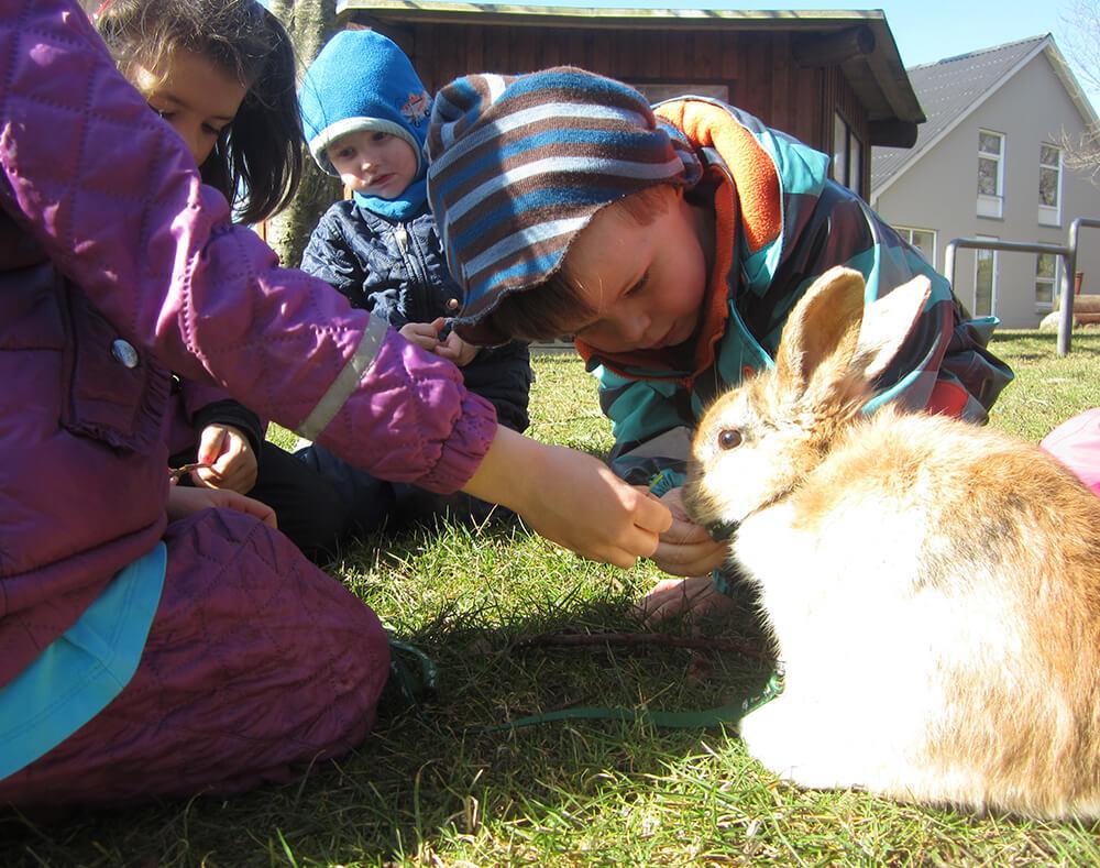 Gården i Ryde - Børnehave med dyr