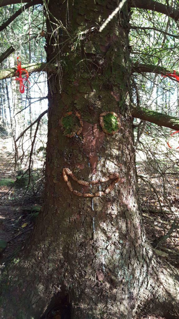 Skovuger med børnehaven - Naturbørnehave